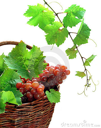 Free Wine Grapes In Basket Stock Image - 3067031