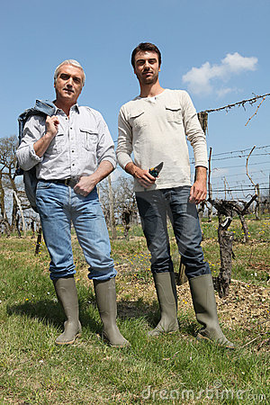 Wine producers checking vines