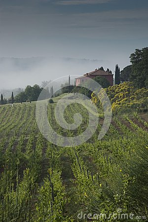 Tuscany wineyard,old country house,misty morning