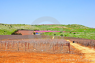 Wine Yard, Israel