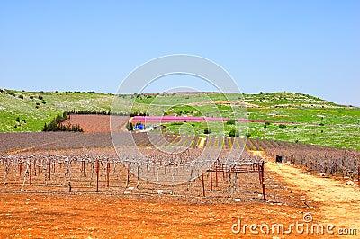 Wine Yard, Israel