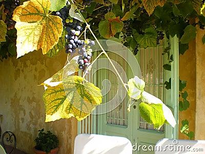 winefarm wedding venue Tuscany Italy