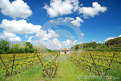 Winegrowing in France Alsace