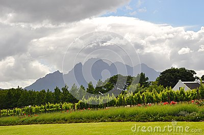 winelands Cape Town South Africa