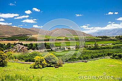 Winelands scenery