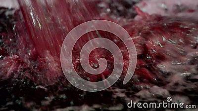 Winemaker που κάνει τη δοκιμή κρασιού στο κελάρι οινοποιιών φιλμ μικρού μήκους