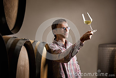 Winemaker analyzing white wine in cellar.
