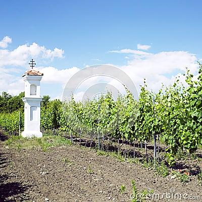 Wineyard, Czech Republic