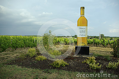 Wineyard de Sautern Foto editorial