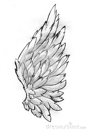 Free Wing Pencil Sketch Stock Photography - 52328562