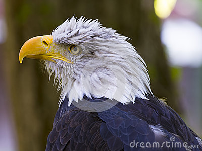 Winged predator