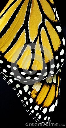 Free Wings Of A Butterfly Stock Photos - 28148603