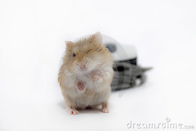 Wink mouse.