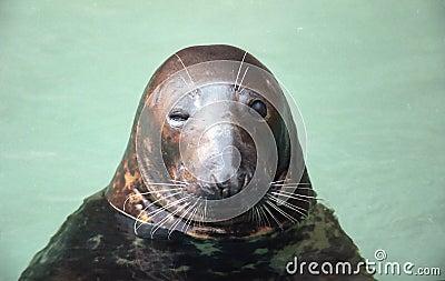 Winking seal