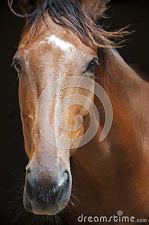 Winner racehorse