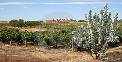 Winnica wytwórnia win