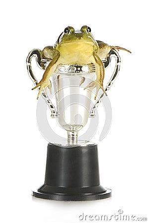 Winning frog