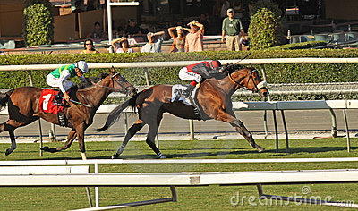 Winning a Turf Handicap Race Editorial Stock Image