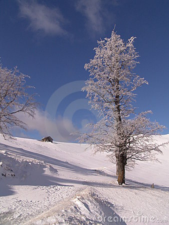 Free Winter Stock Photography - 117132