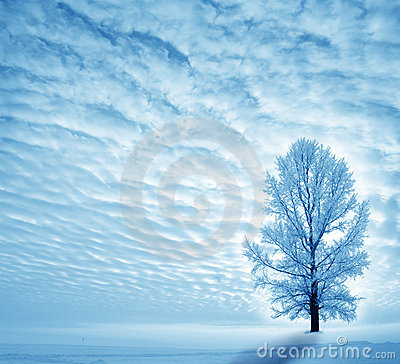 Free Winter Stock Photography - 21619202