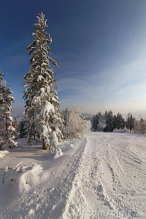 Free Winter Royalty Free Stock Photography - 348827