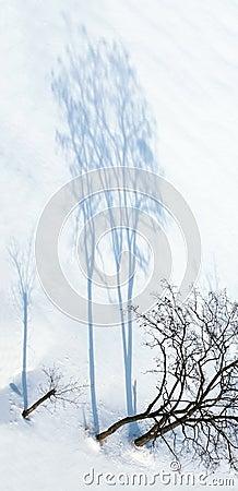 Free Winter Stock Photos - 468713