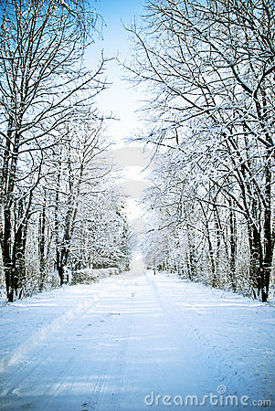 Free Winter Alley Royalty Free Stock Image - 16892596