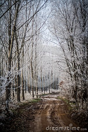 Winter Forest Trail