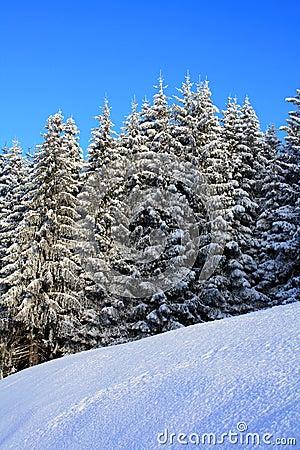 Winter background 03