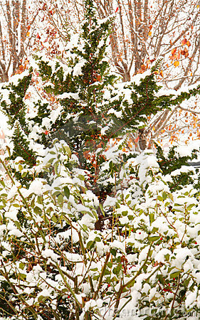 Winter Background with Snow Covered Leaves