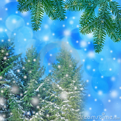 winter background - trees covered with snow