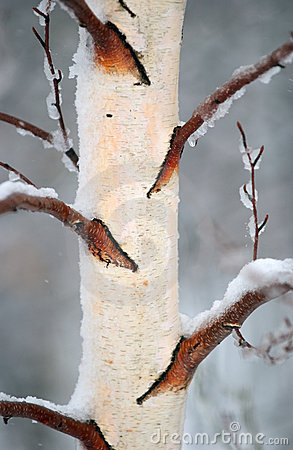 Winter Bark 2