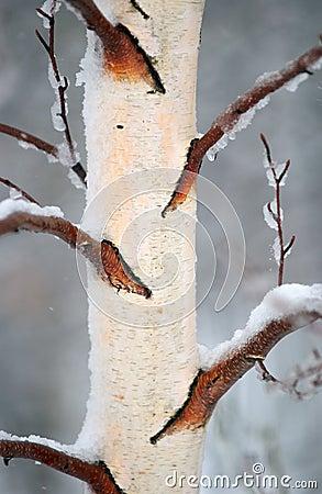 Winter Bark 2