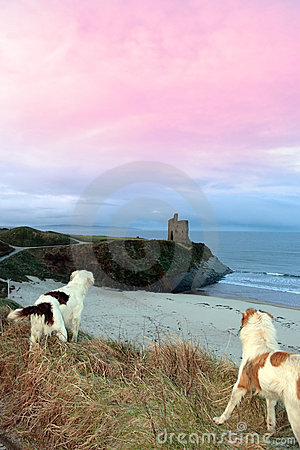 Winter beach and castle view with dogs