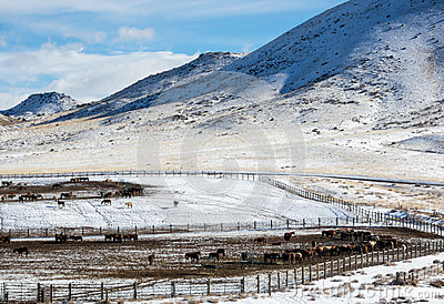 Winter Blm Wild Horse Adoption Facility Stock Photo