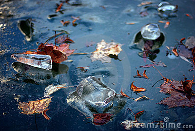 Winter blue ice and maple leaves frozen in river