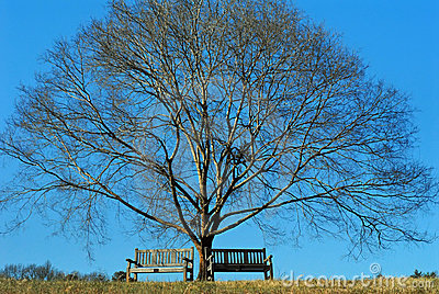 Winter blues tree and benches