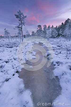 Free Winter Bog Stock Photography - 84793382