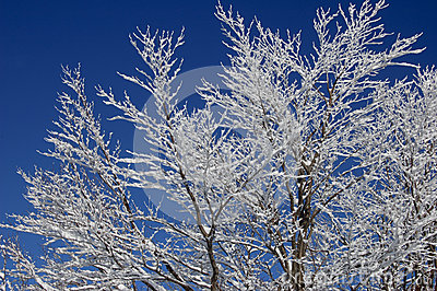 Winter on branches