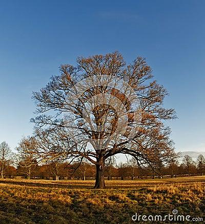 Winter in Bushy Park
