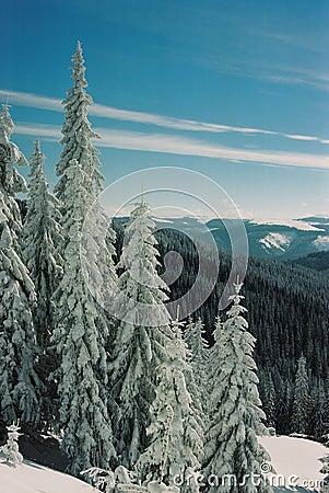 Winter Carpathians