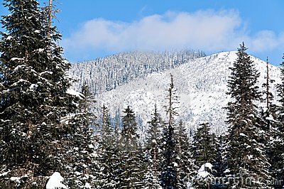 Winter in the Cascade mountains