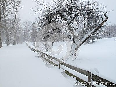 Winter Comes to the Neighborhood