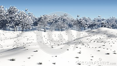 Winter Coppice
