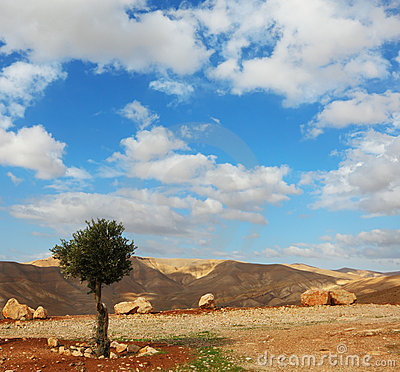 Winter day in the Judean desert