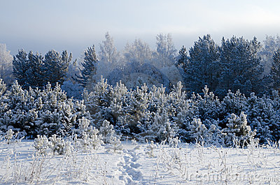 Winter day in Siberia