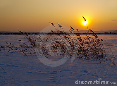 Winter decline in the field