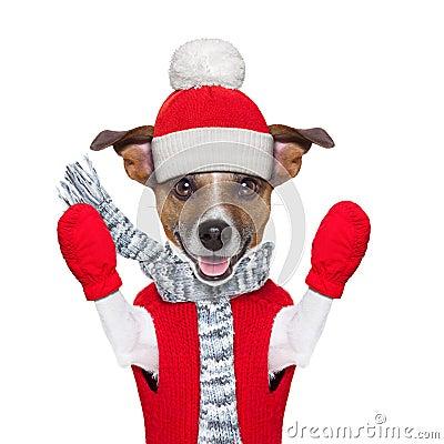 Winter dog