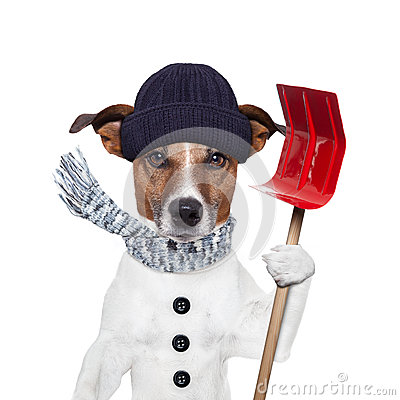 Free Winter Dog Shovel Snow Royalty Free Stock Image - 26629666