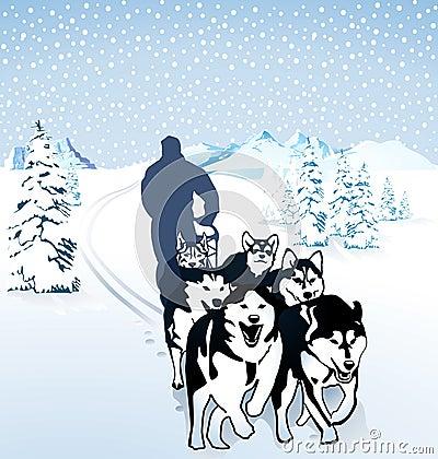 Winter dog sledding